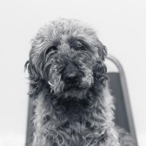 Abbeydale office dog